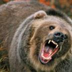 Sam and the Bear