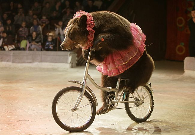 Beast on a Bicycle