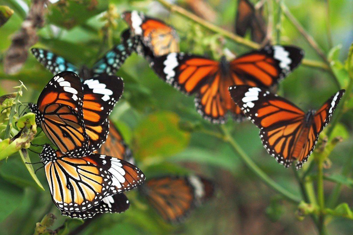 Butterflies & Ants